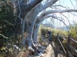 Tree Barrel!!!