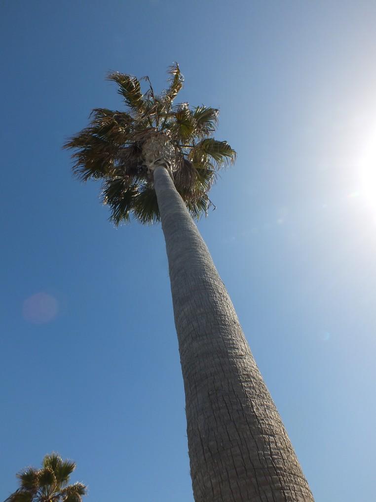 ocean beach palm tree