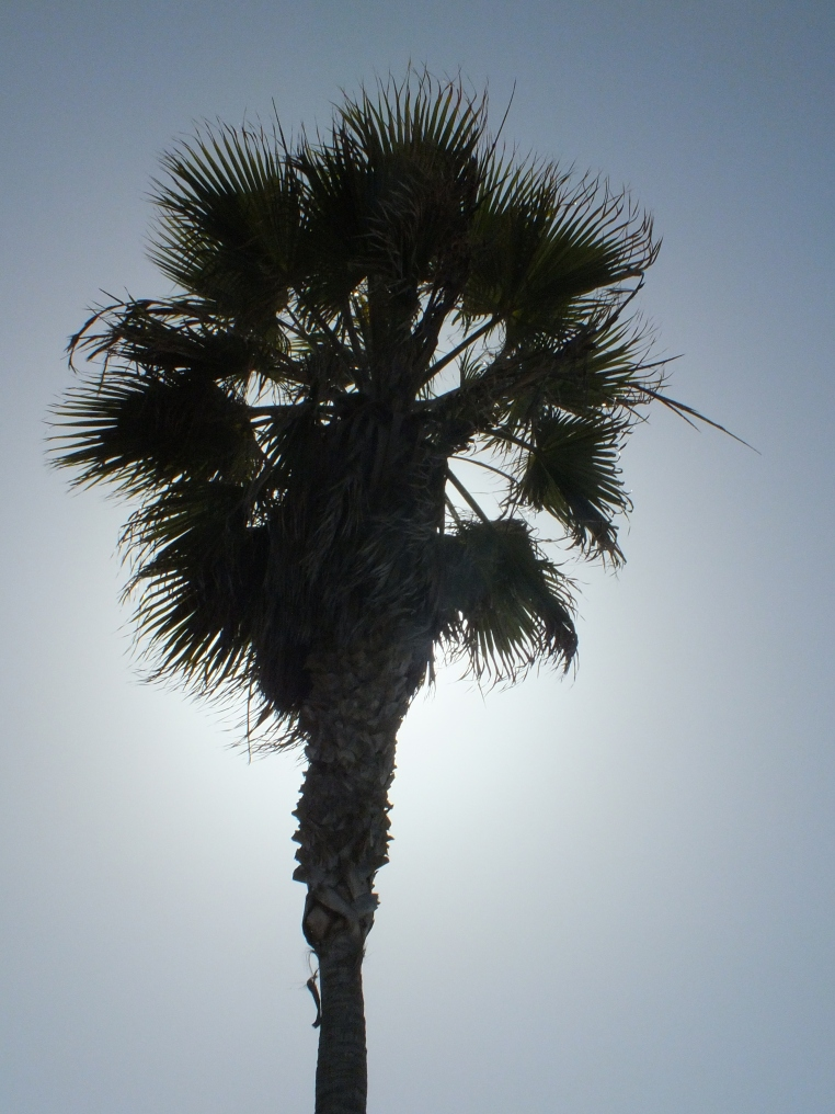ocean beach palm tree