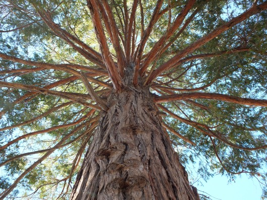 Tree Limbs pic