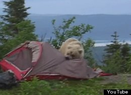 epic fail bear eating tent