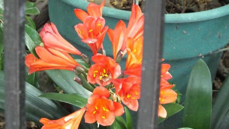 backyard-flower
