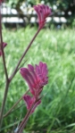 outdoor Adventures 2: flowers