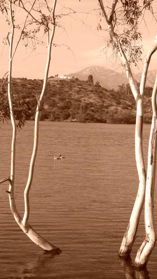 Lake Jennings Nature pics