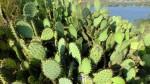 Lake Jennings Cactus Pic