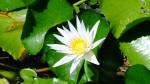 Plants flowers kauai pic