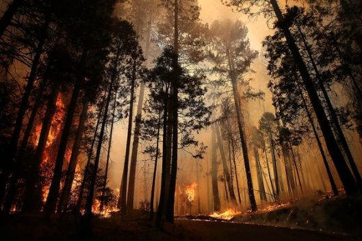 rim fire yosemite 4th largest fire