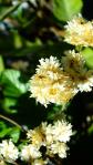 plants flowers san gabriels