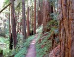 Redwoods and Douglas Fir Hike No 22