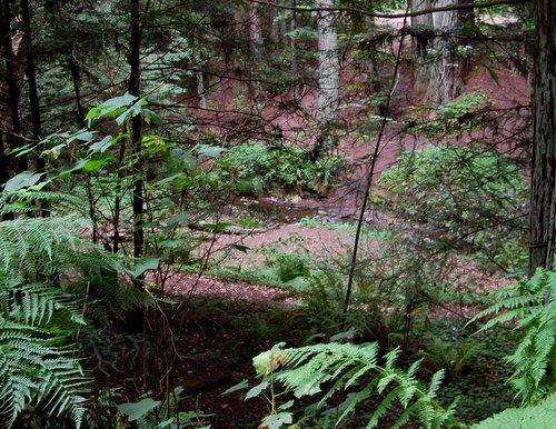 Purisima Creek Hike No 22
