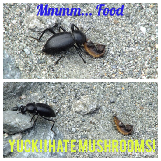 stink bug humor