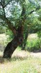 dos picos camping tree